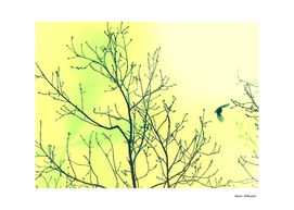 Bird in the sky yellow & green