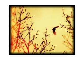 Bird in the sky yellow