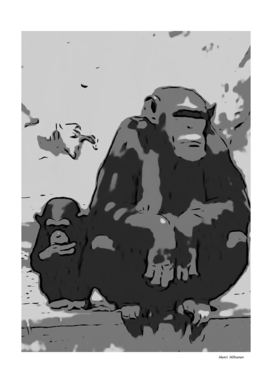 Chimpanzee 13