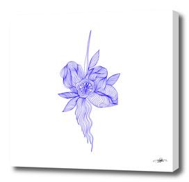 Ultramarine Flower