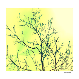 Branches yellow & green