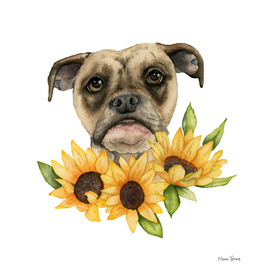 Cheerful | Bulldog Mix with Sunflowers Watercolor Painting