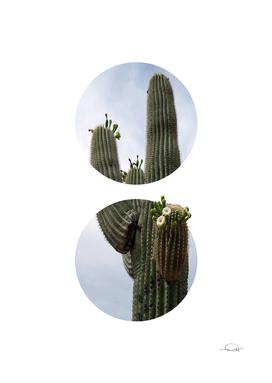 Circled Cactus Flowers