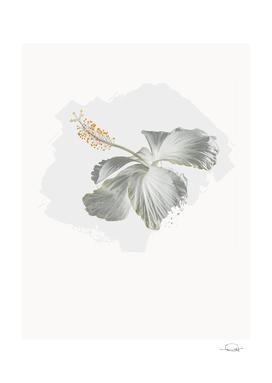 Bloom Hibiscus White