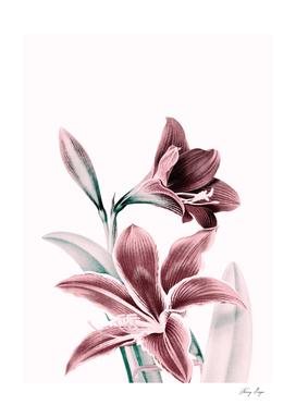 flowers / 54