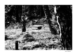 Forrest 6