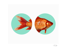 Circled Goldfish