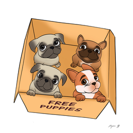 Free puppies