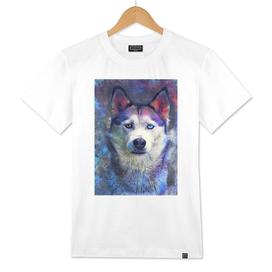 Dog Husky