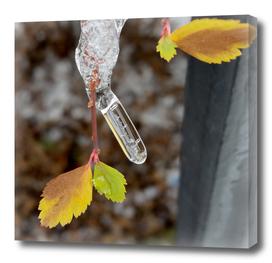 Icicle on leaf