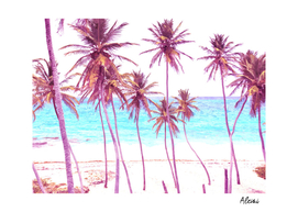 Palm Beach Illustration