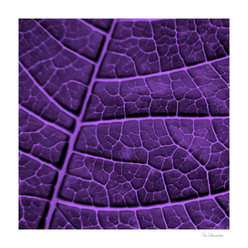 LEAF STRUCTURE ULTRAVIOLET no3