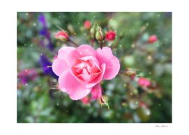 Pink Flower Rose Green Background Snowflake Valentine