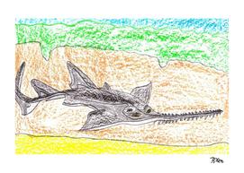 Freshwater Sawfish
