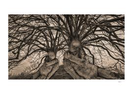Let Sleeping Trees Lie