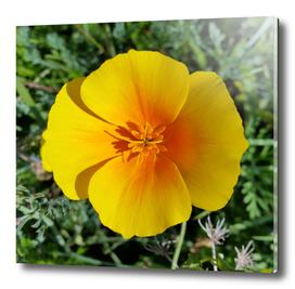 yellow of autumn