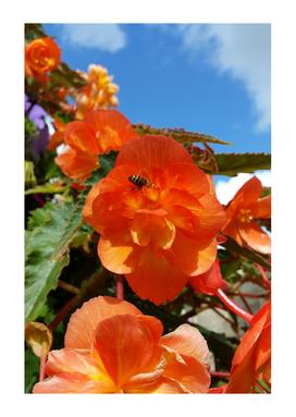 sky flowers and bee