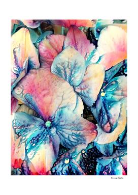 Hydrangea Dreams