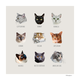 snouts of cats