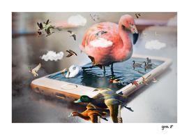 Birds Island by GEN Z