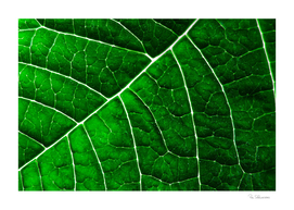 LEAF STRUCTURE GREENERY