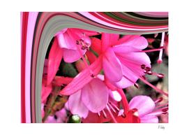 Pink Fuchia