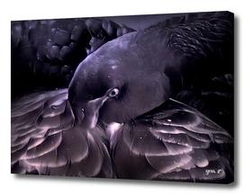Black Swan by GEN Z