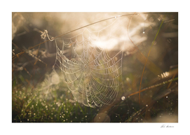 Web of Light