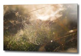 Web of Light