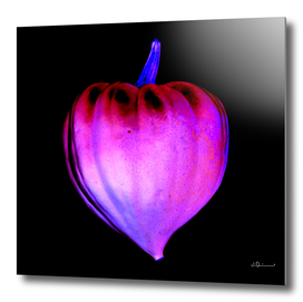 Heart-Shaped Squash - ColorNegative Edition