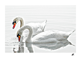 Swangs couple on the lake oil