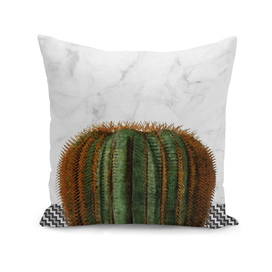 Cactus on White Marble Wall with Pattern
