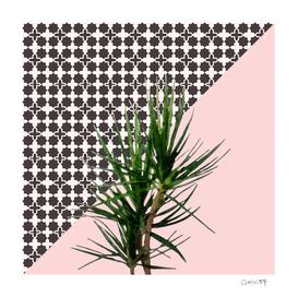 Dracaena on Pink and Lattice Pattern