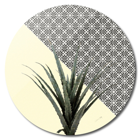 Dracaena Plant on Lemon and Lattice Pattern Wall