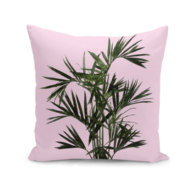 Palm Plant on Pink Wall