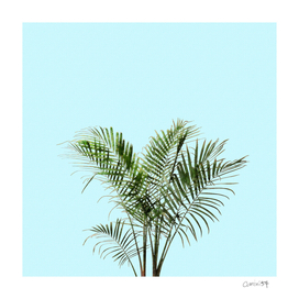 Palm Plant on Teal Wall
