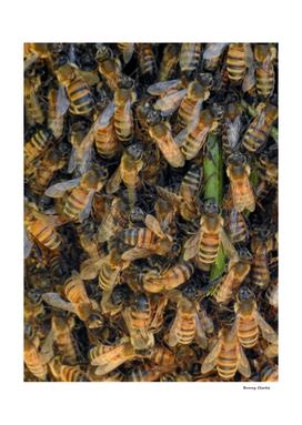 Beautiful Bees