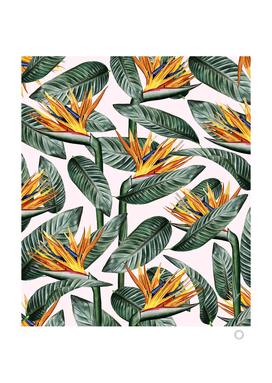 Bird of Paradise Pattern