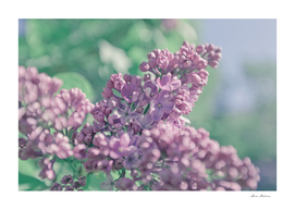 Beautiful lilac background. Pastel purple colors.