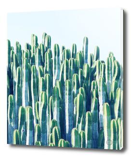 Cactus V2