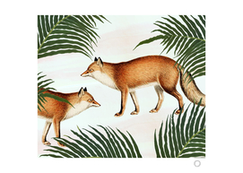 Red Fox Pair
