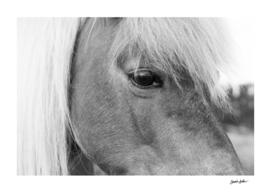 Pony Eye