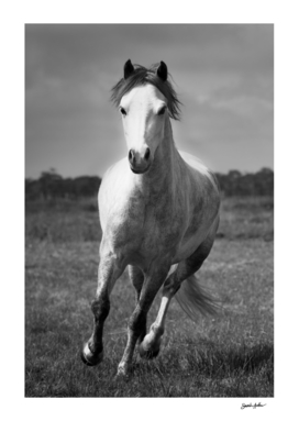 Running Pony - Portrait