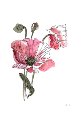 Poppies illustration
