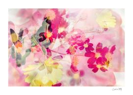 Wild Flower IV