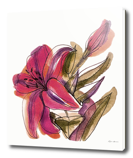 Illustration of a lily flower