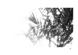 House Plant MORE Plant