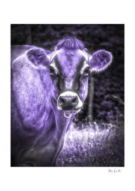 Ultraviolet  Cow