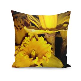 Daffodils LG02