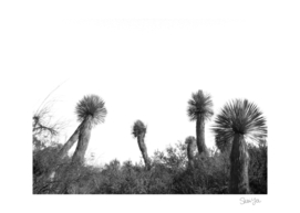Desert Cacti Fireworks Display